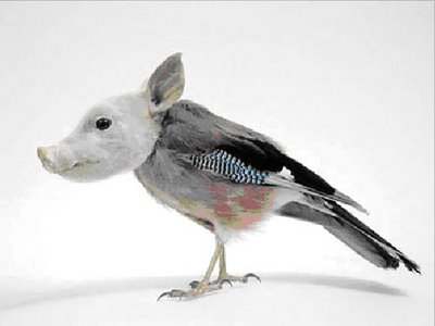 birdpig