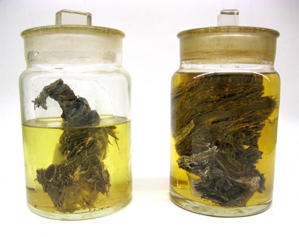 pickledmammoth