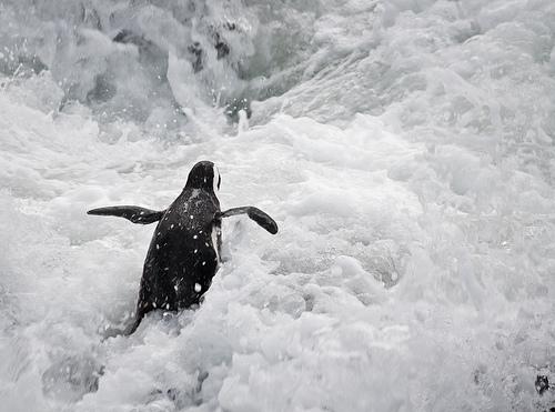 run penguin run