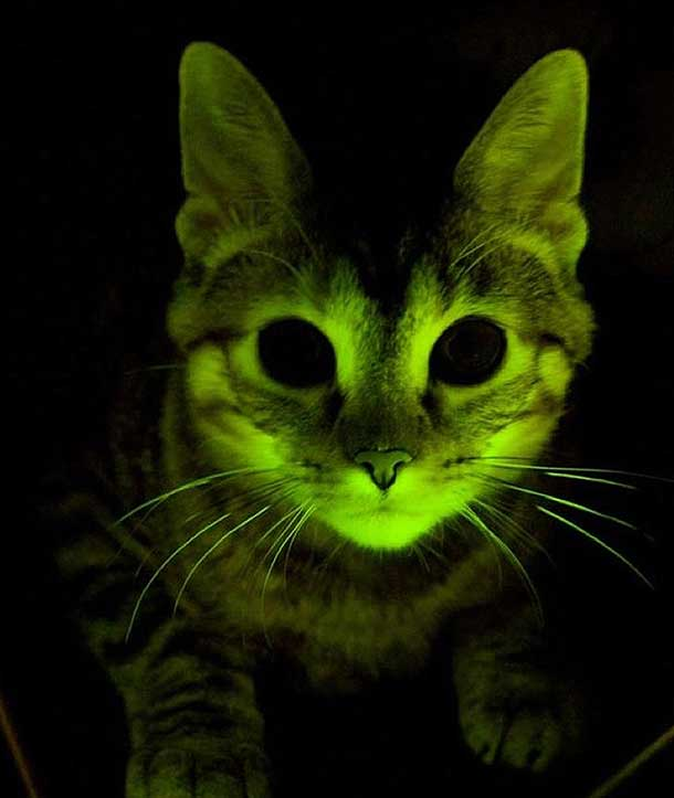 glowkitty