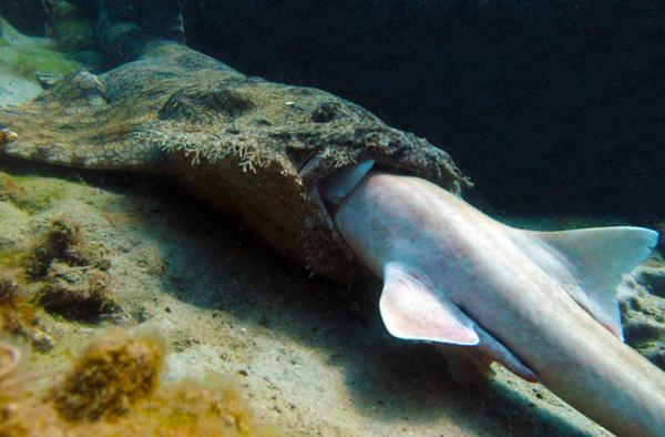 sharkeatshark