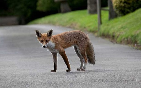 foxmugger