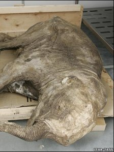 wooly mammoth.jpg