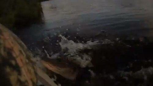 Alligator Attack - YouTube.jpg