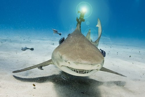 shark laser beam head.jpg