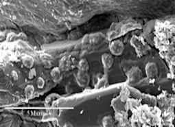 Shergotty Meteorite up close