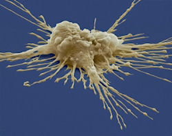 Stem cells create liver bud