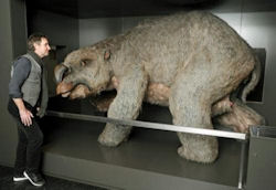 Giant Wombat with Man