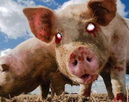 Killer Pig