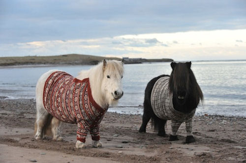 Scotland Sweater Sheep